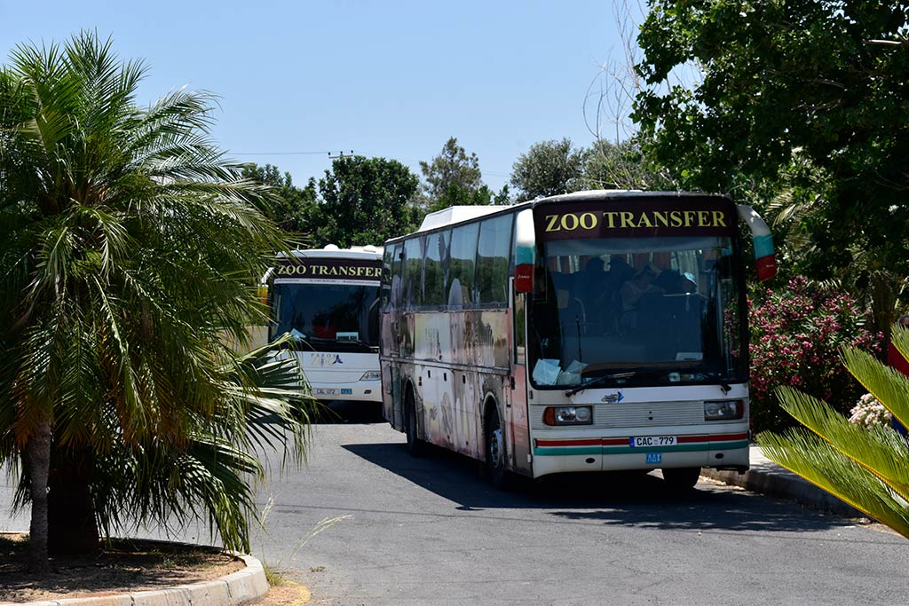 paphos-zoo_02-buses
