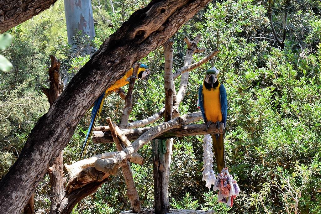 paphos-zoo_04-parrots