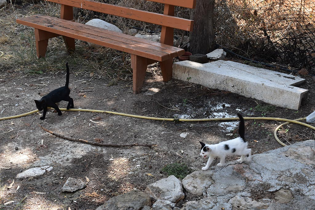 the-cats-of-st-theodosius_05
