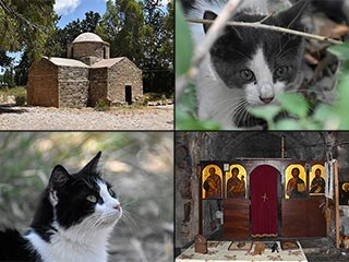 The Cats of St Theodosius