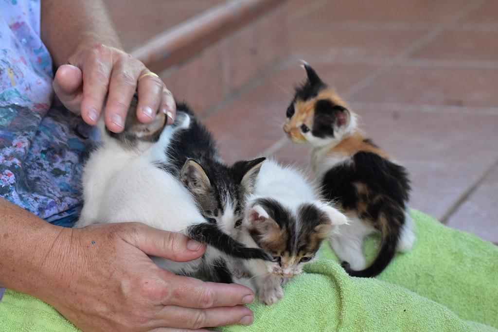 kitten-capers_01