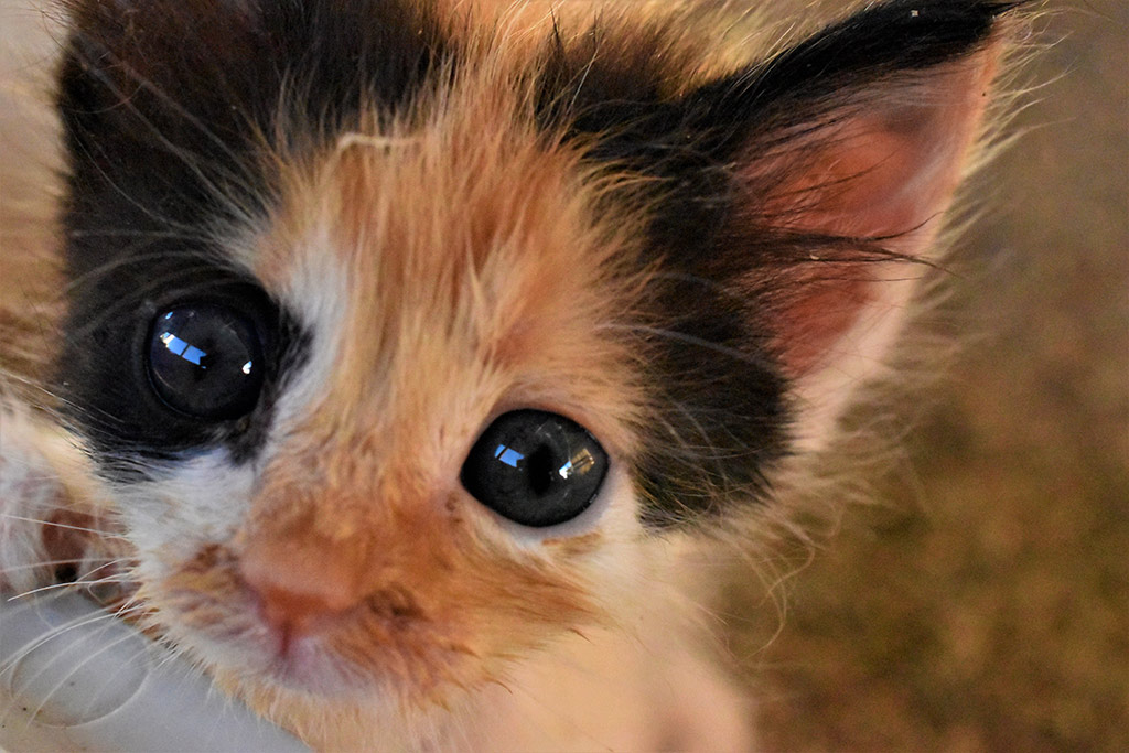 kitten-capers_02