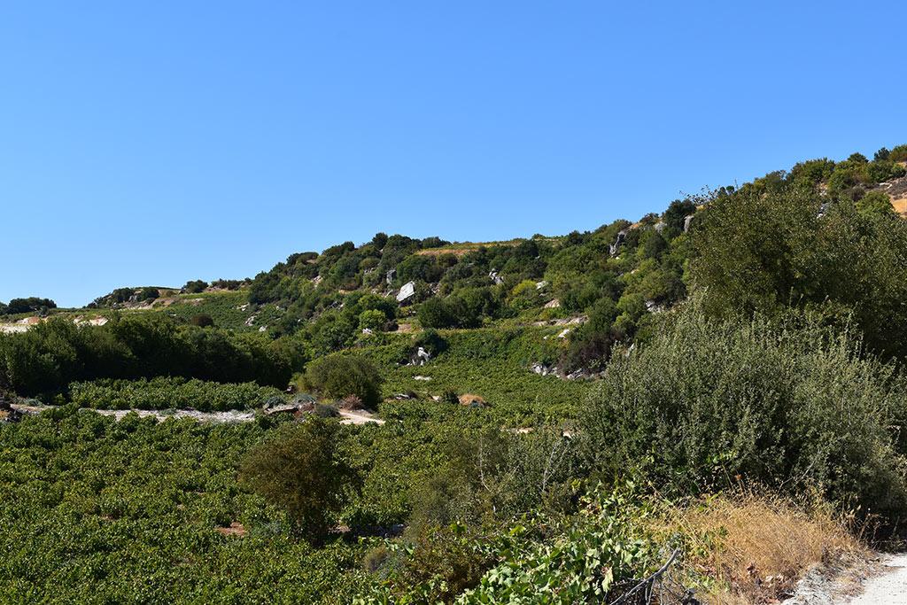 panagia-hills_03