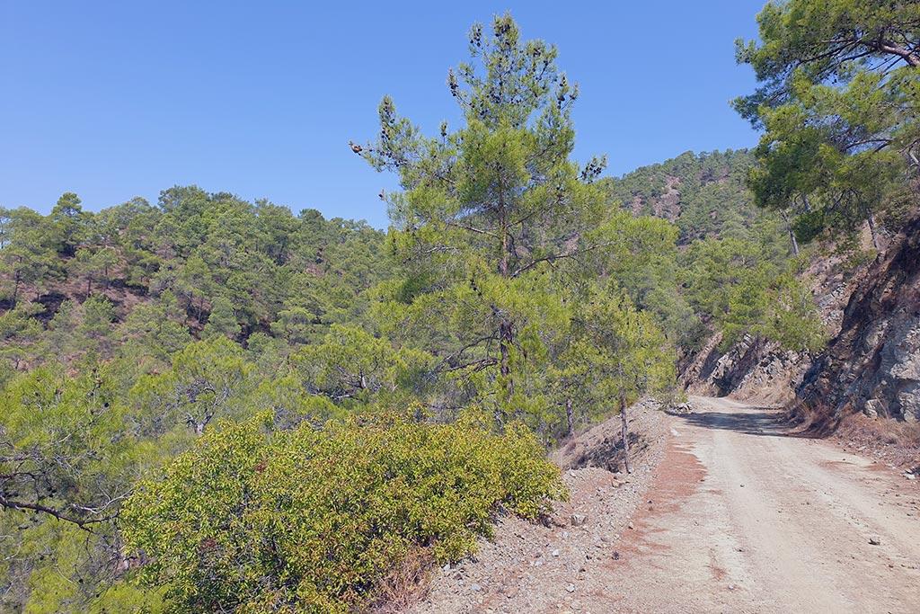 paphos-forest-drive_05