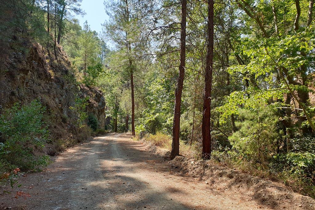 paphos-forest-drive_09
