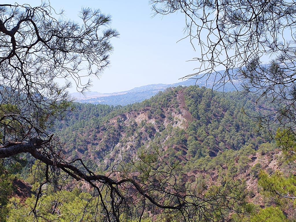 paphos-forest-drive_10