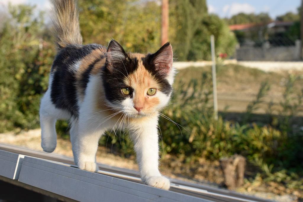 birthday-cats_10