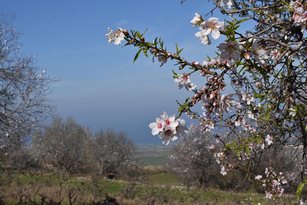 droushia-blossom_02