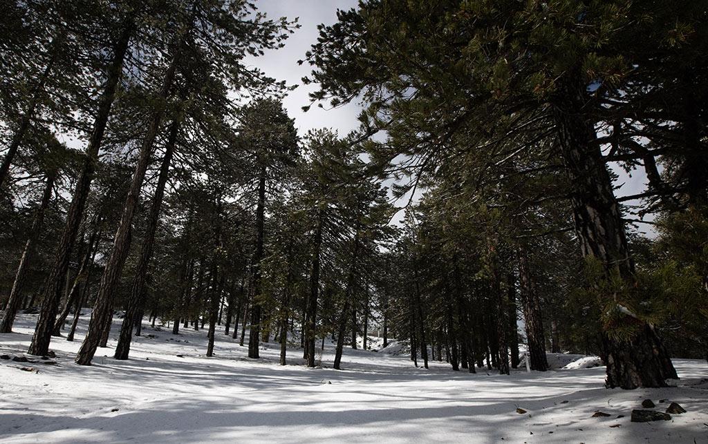 troodos-winter-snow_03
