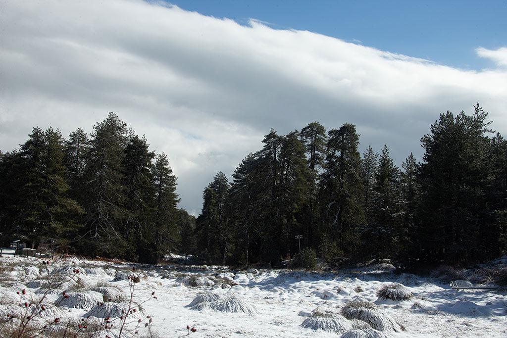troodos-winter-snow_04