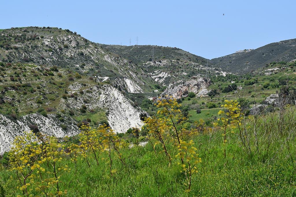cyprus-spring-flowers_01