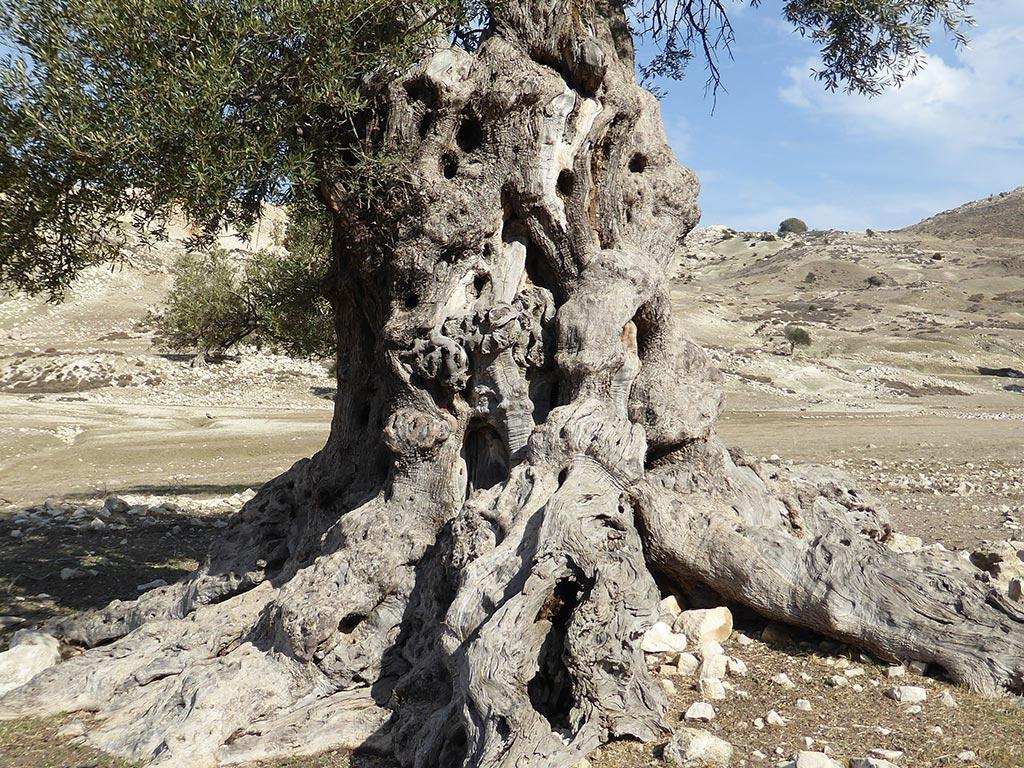 closeup_of_the_tree
