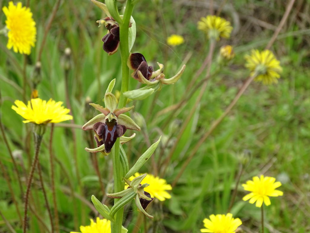 orchids_04