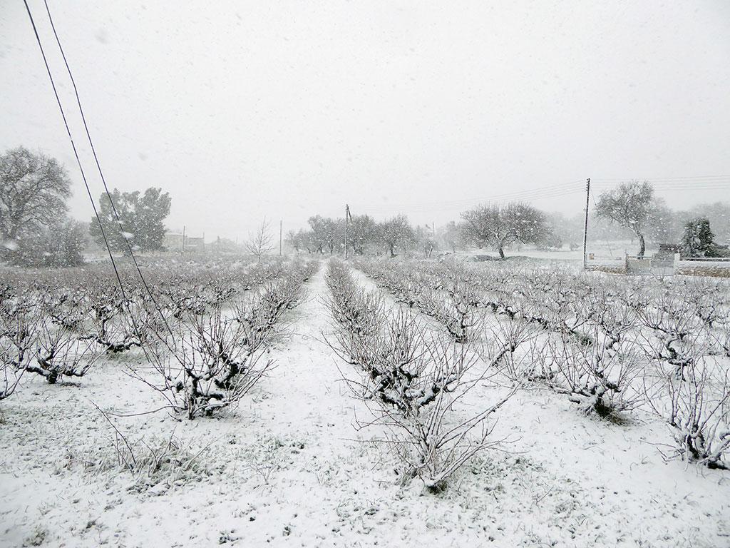 03_vineyard-_in_snow