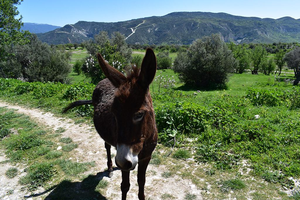 vretsia-donkey-capers_05