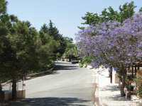 Jacaranda Tree Marathounda