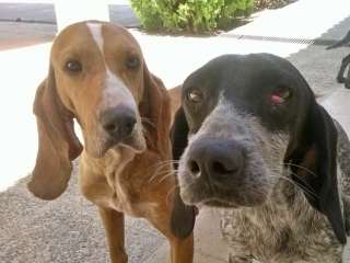 Animal Party urges vigilance after dog thefts