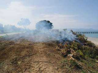 Burned Akamas area to be restored