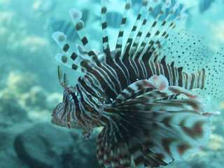 EU grant to fight lionfish