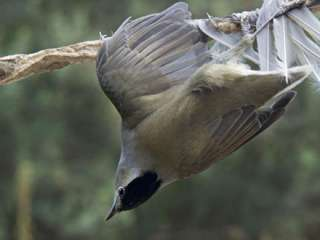 Hefty fines for illegal bird trappers by Bases court