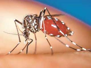 Malaria outbreaks reported in the north