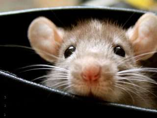 Mouse brings civil service office to a standstill