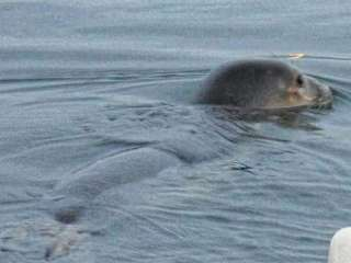 Paphos: Two seals make appearance at Dimotika Bania